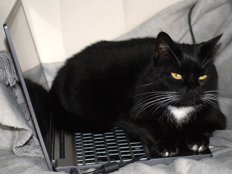 furry black cat lays over a laptop on a bed