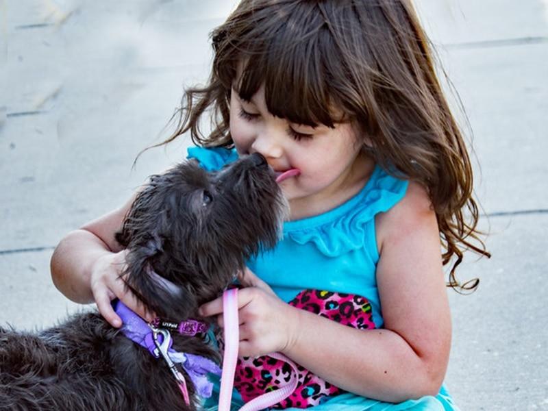 a little girl pets her new, little black dog