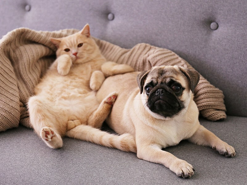 a cat and a dog laying together on a couch